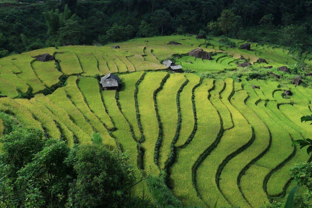 Vietnam, Landscape